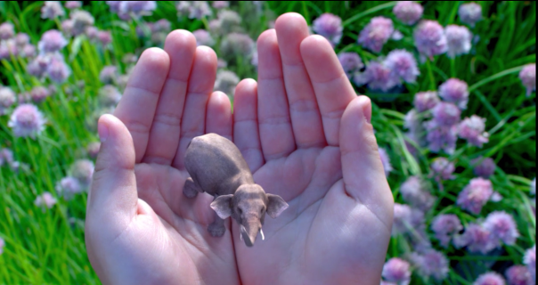 Magic Leap Video Link Image