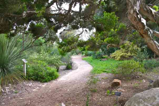 Quail_botanical_gardens in San Diego
